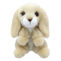 Little Lop Rabbit